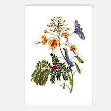 Maria Sibylla Merian IX Postcards (Package of 8)
