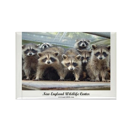 Raccoons_For_CafePress Magnets