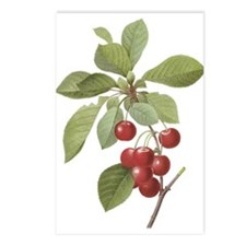 Cherry branch Postcards (Package of 8)