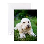 Labradoodle Greeting Cards (Pk of 20)