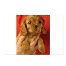 Cavalier Postcards (Package of 8)