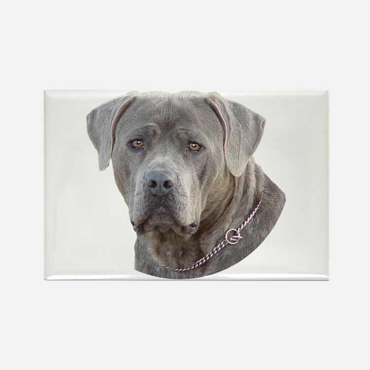 Cane Corso Rectangle Magnet