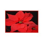 Poinsettia Rectangle Magnet (10 pack)