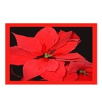 Poinsettia Postcards (Package of 8)