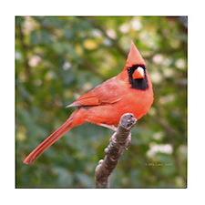 Marvelous Cardinal Tile Coaster
