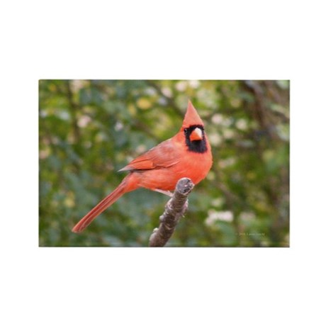 Marvelous Cardinal Rectangle Magnet (100 pack)