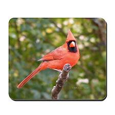 Marvelous Cardinal Mousepad