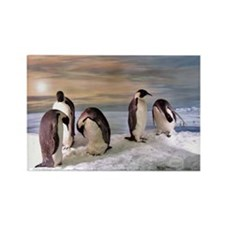 Penguins from Antarctica Rectangle Magnet (10 pack
