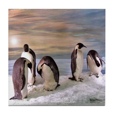 Penguins from Antarctica Tile Coaster