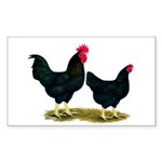 Black Broiler Chickens Rectangle Sticker 50 pk)