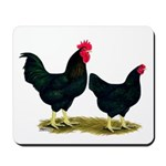 Black Broiler Chickens Mousepad