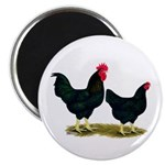 Black Broiler Chickens Magnet