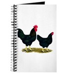 Black Broiler Chickens Journal