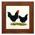 Black Broiler Chickens Framed Tile