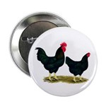 "Black Broiler Chickens 2.25"" Button"