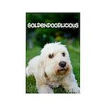 Goldendoodlicious Goldendoodle Rectangle Magnet