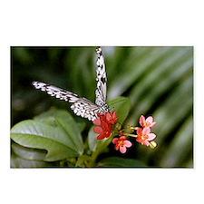 Cute Black white flower Postcards (Package of 8)