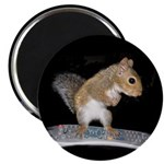 Surfer Squirrel Magnet