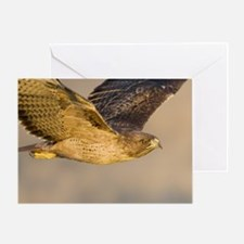 May, Red-tailed Hawk Greeting Card