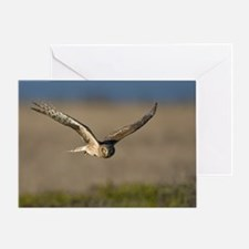 March, N. Harrier Greeting Card