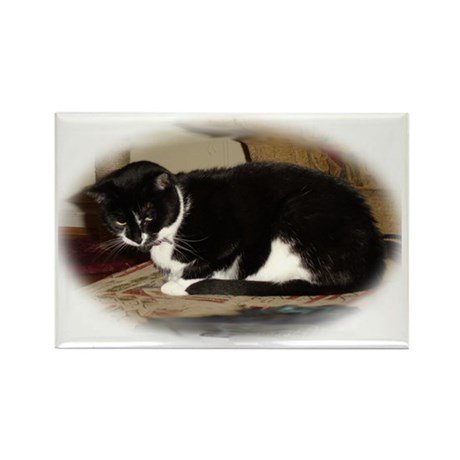 Rectangle Cat Magnet (10 pack)