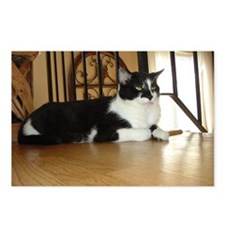 Tuxedo Cat Postcards (Package of 8)