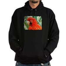 Green Winged Macaw Hoodie