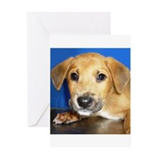 Rescue Dog - Greeting Card