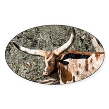 Spotted Watusi Bull Oval Decal
