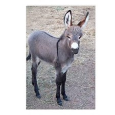 burro Postcards (Package of 8)