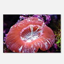 Reef Life Postcards (Package of 8)
