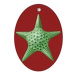 Thalamphora Star Ornament