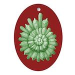 Thalamphora Spiral Ornament