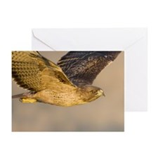 May, Red-tailed Hawk Greeting Cards (Pk of 10)