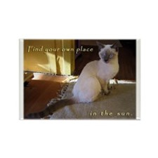Siamese Sun Kitten Rectangle Magnet