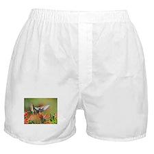Hummingbird Sip Boxer Shorts