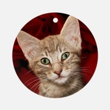 Grey Tabby Kitten Ornament (Round)