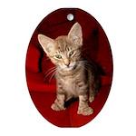 Hemingway Kitten Oval Ornament