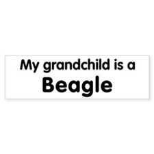 Beagle grandchild Bumper Bumper Sticker