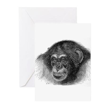 Chimpanze Greeting Cards (Pk of 10)