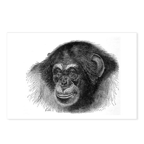 Chimpanze Postcards (Package of 8)