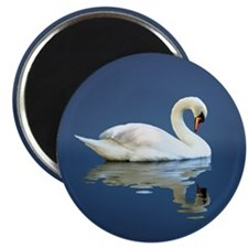 Swan Reflects Magnet