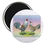 Ameraucana Chickens Pair Magnet