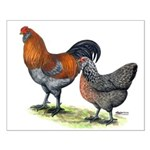 Ameraucana Fowl Small Poster