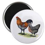 """Ameraucana Fowl 2.25"""" Magnet (10 pack)"""