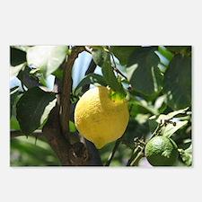 Lemons Postcards (Package of 8)