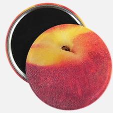 "Atlanta Fuzzy Peach 2.25"" Magnet (100 pack)"