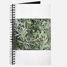 Olives Journal