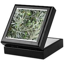 Olives Keepsake Box