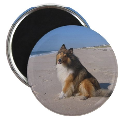 """Collie at the Beach 2.25"""" Magnet (10 pack)"""